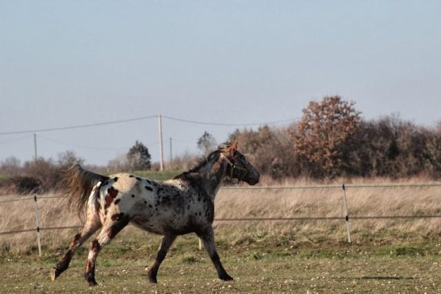 Pour les cavaliers ! Img_1810