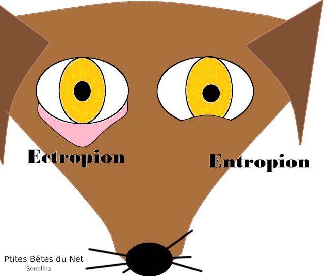 L'entropion et l'ectropion Ptites11