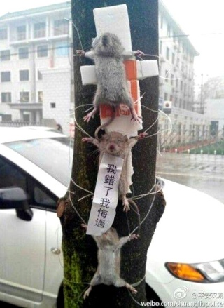 [Article] Chine: 3 souris ligotées à un arbre pour vol de légumes Souris10