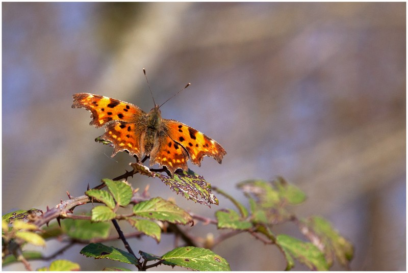 Un papillon Img_1314