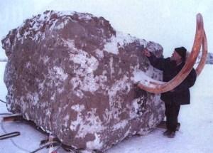 L'Énigme des mammouths gelés Mammou10