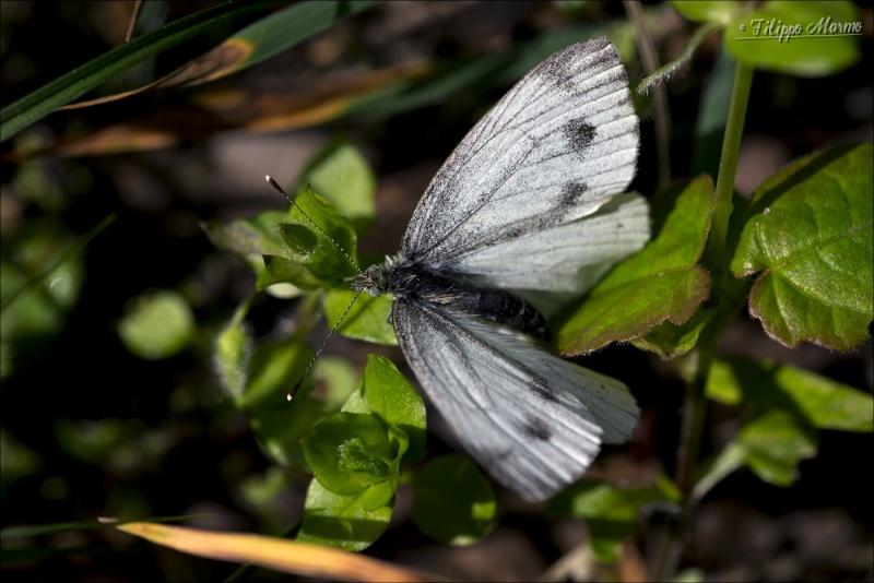 Le mie macro ( con Sigma 105 f/2.8 ) : insetti e non solo ... Fil_0410