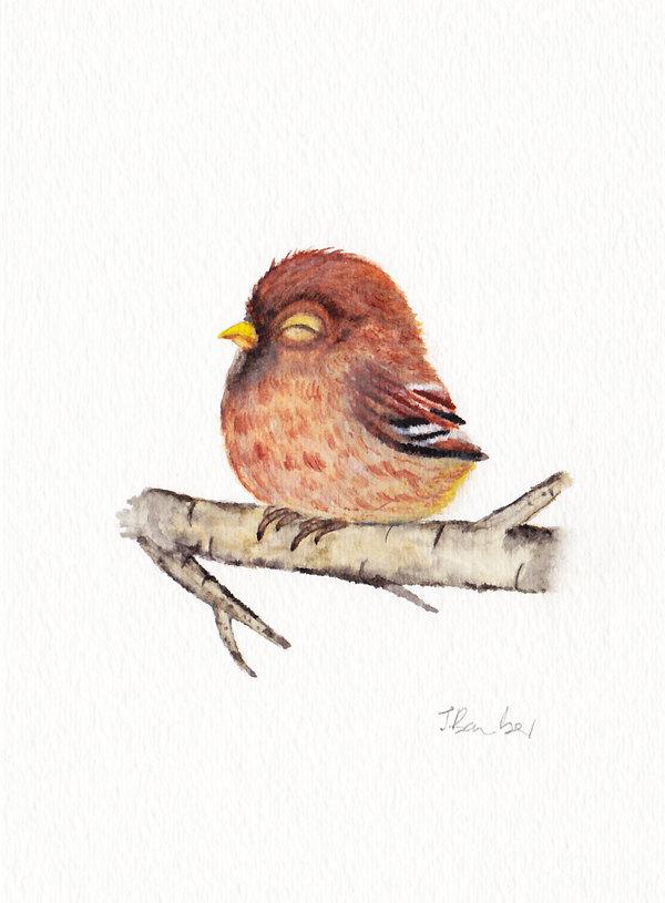 Bon Mercredi Oiseau10