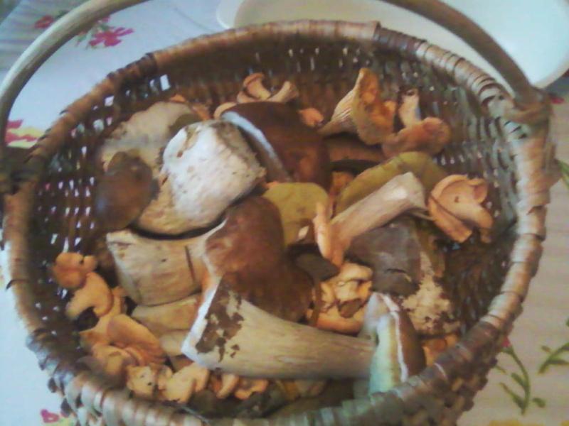 champignons trouvé par moi (coutolien) ... - Page 2 Photos10