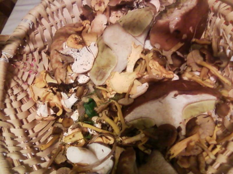 champignons trouvé par moi (coutolien) ... - Page 2 Photos13