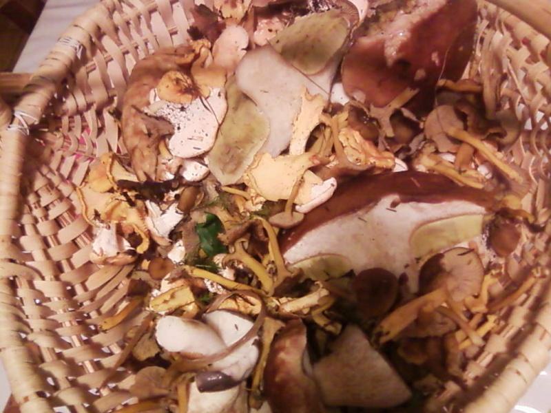 champignons trouvé par moi (coutolien) ... - Page 2 Photos14