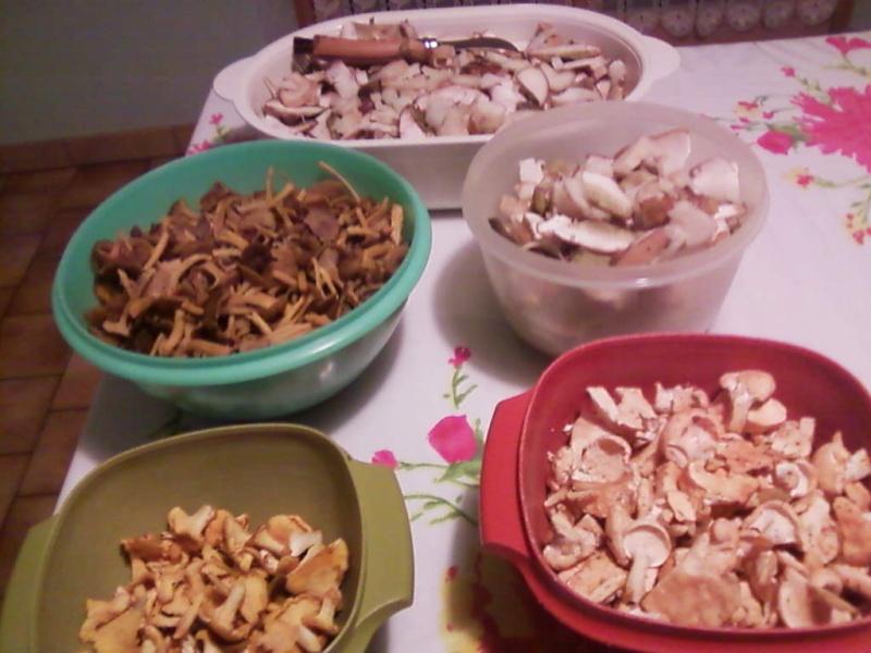 champignons trouvé par moi (coutolien) ... - Page 2 Photos15