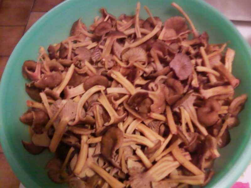 champignons trouvé par moi (coutolien) ... - Page 2 Photos18