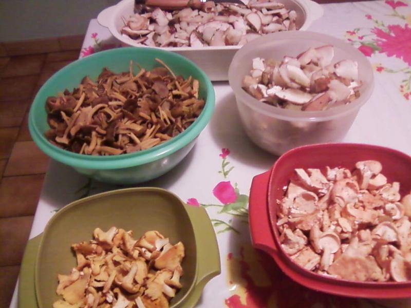 champignons trouvé par moi (coutolien) ... - Page 2 Photos21