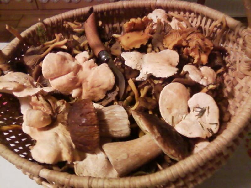 champignons trouvé par moi (coutolien) ... - Page 3 Photos37