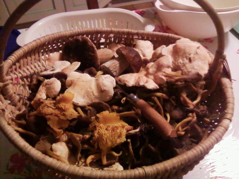 champignons trouvé par moi (coutolien) ... - Page 3 Photos38