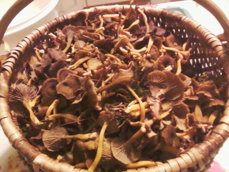 champignons trouvé par moi (coutolien) ... - Page 3 Photos39