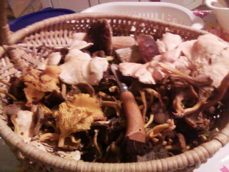 champignons trouvé par moi (coutolien) ... - Page 3 Photos40