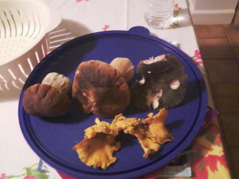 champignons trouvé par moi (coutolien) ... - Page 3 Photos41