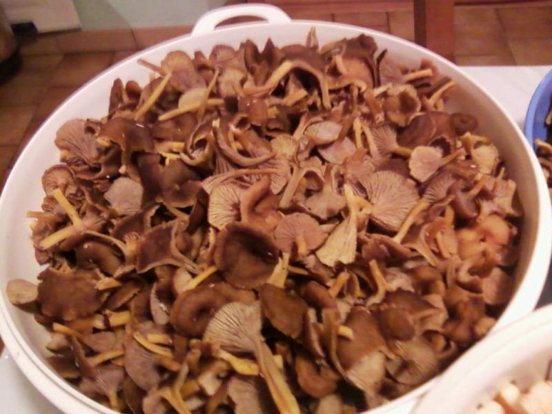 champignons trouvé par moi (coutolien) ... - Page 3 Photos43