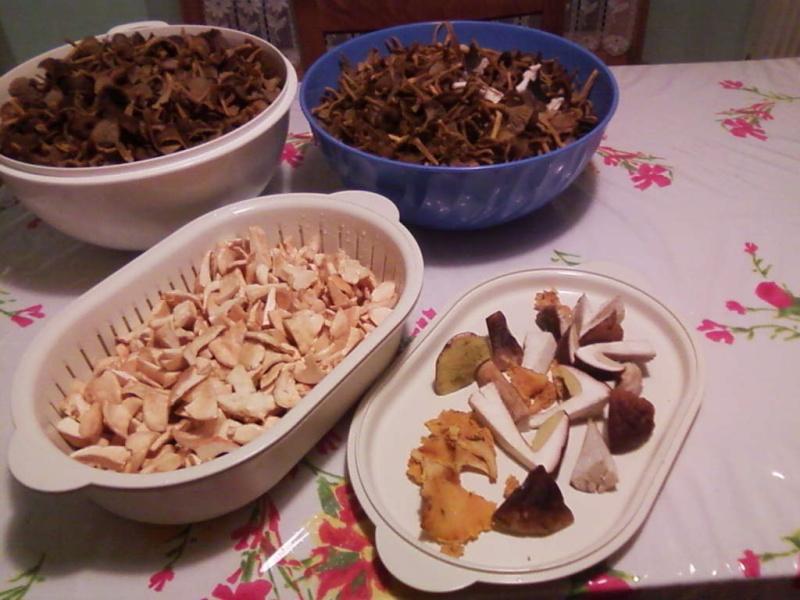 champignons trouvé par moi (coutolien) ... - Page 3 Photos45