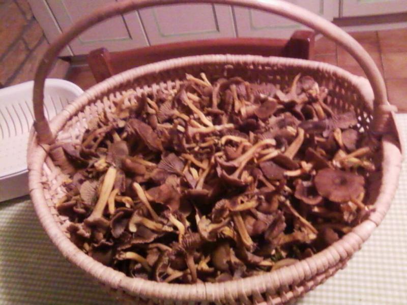 champignons trouvé par moi (coutolien) ... - Page 3 Photos46