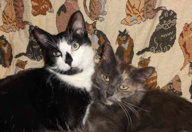 Photos de chats petits et que Beaux_10