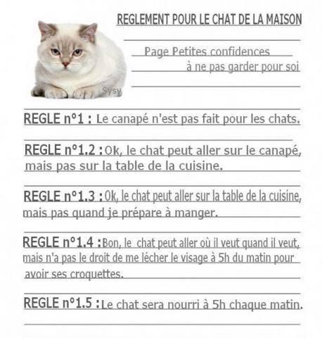 Le comportement des chats - Page 2 Reglem10