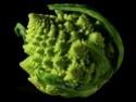chou choux chou... Brassica oleracea Brassi14