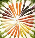 Carotte Carrot10