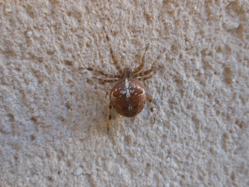 Une araignée du soir Araign10