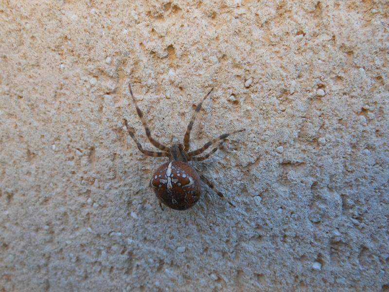 Une araignée du soir Araign11