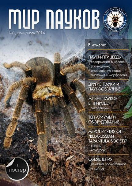 Книга про пауков с картинками