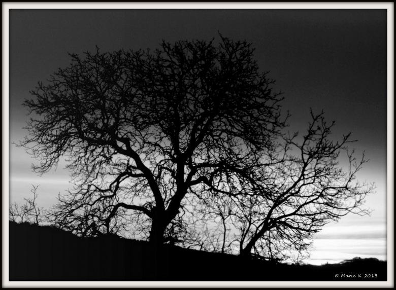 Clair obscur  P1234513