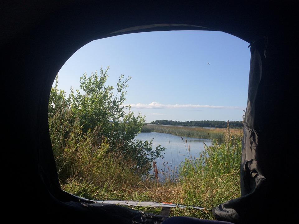 Le voilà- Suède 2019- un mois intense dans la nature Lapone 87516811
