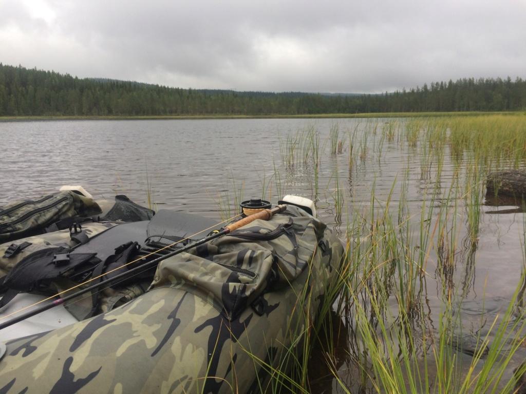 Le voilà- Suède 2019- un mois intense dans la nature Lapone Img_3511