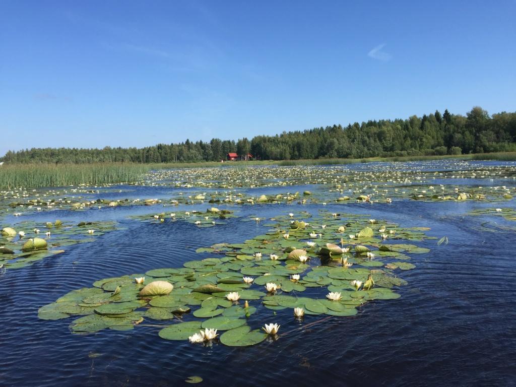 Suède 2018: un mois au paradis... Img_7111