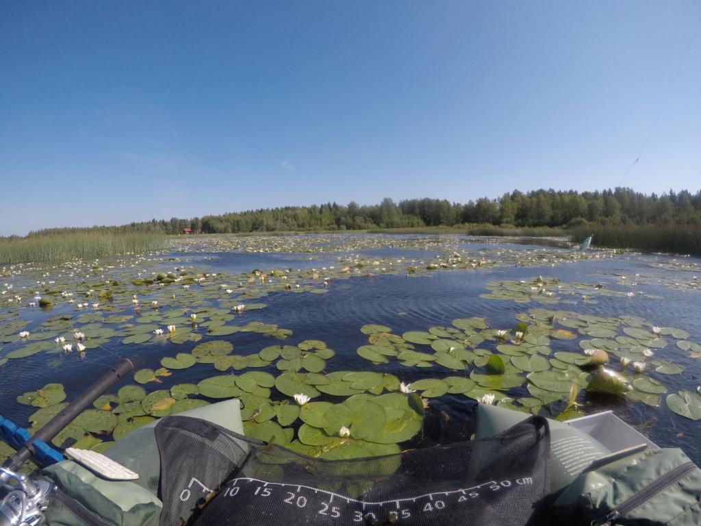 Suède 2018: un mois au paradis... Pgwc4510