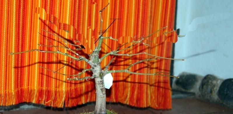 acero potatura invernale Acero410