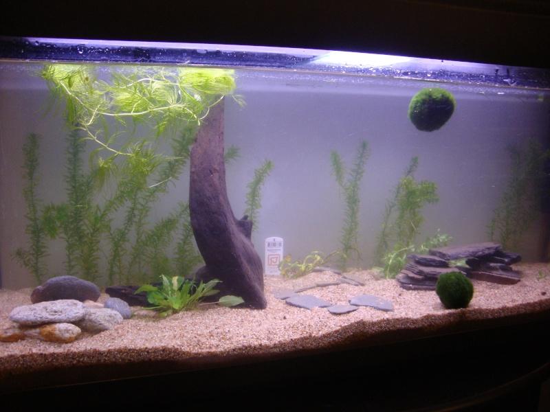 Conseil pour 1er aquarium - Page 2 Dsc08311