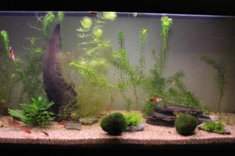 Conseil pour 1er aquarium - Page 2 Img_1215