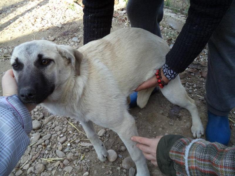 BELLA ChiotF née août 2013 (Anda) Prise en charge Association Rêv'animal Bella211