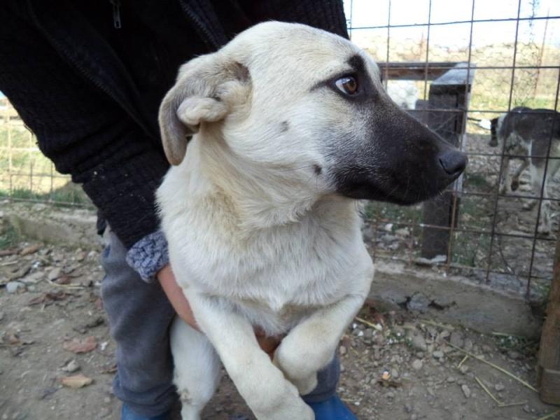 BELLA ChiotF née août 2013 (Anda) Prise en charge Association Rêv'animal Bella310