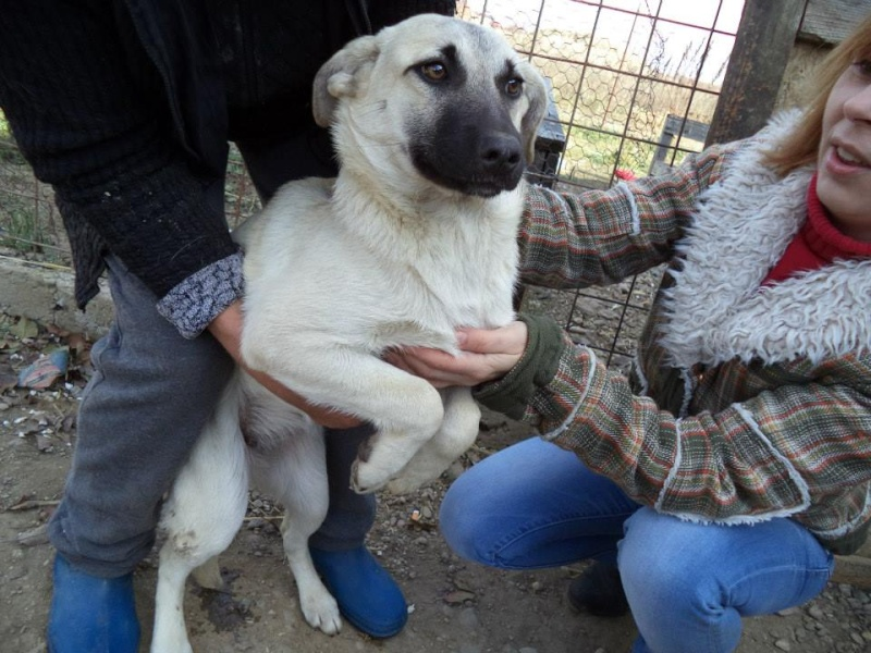 BELLA ChiotF née août 2013 (Anda) Prise en charge Association Rêv'animal Bella610