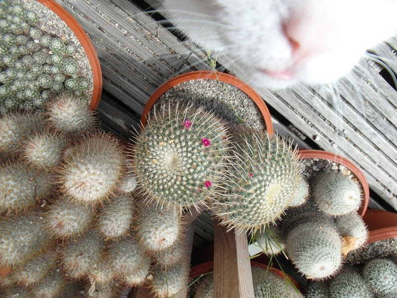 Cacti and Sukkulent in Köln, every day new flowers in the greenhouse Part 74 Bild1115
