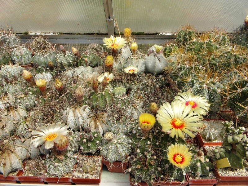 Cacti and Sukkulent in Köln, every day new flowers in the greenhouse Part 74 Bild1155