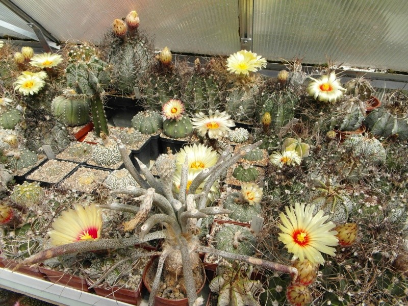 Cacti and Sukkulent in Köln, every day new flowers in the greenhouse Part 74 Bild1156