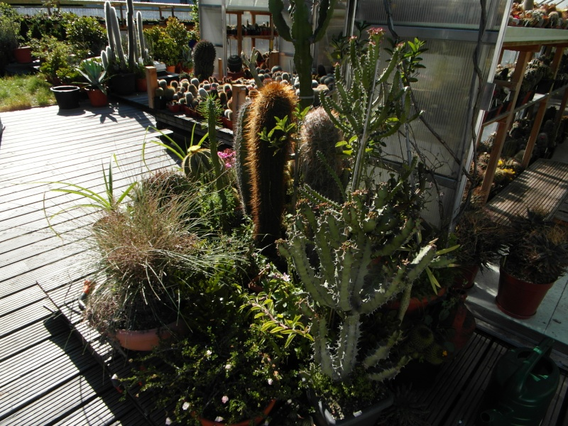Cacti and Sukkulent in Köln, every day new flowers in the greenhouse Part 75 Bild1185