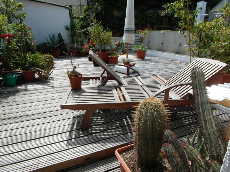 Cacti and Sukkulent in Köln, every day new flowers in the greenhouse Part 76 Bild1327