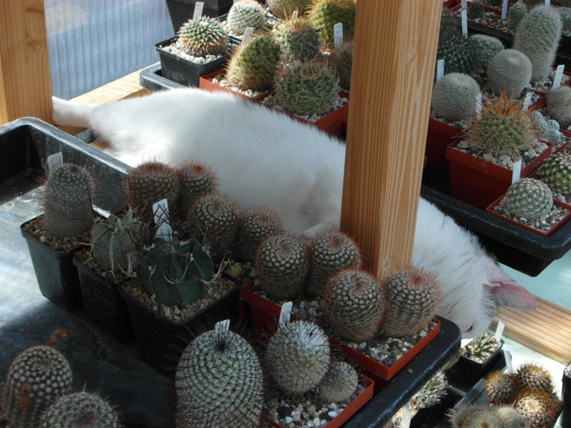Cacti and Sukkulent in Köln, every day new flowers in the greenhouse Part 76 Bild1340