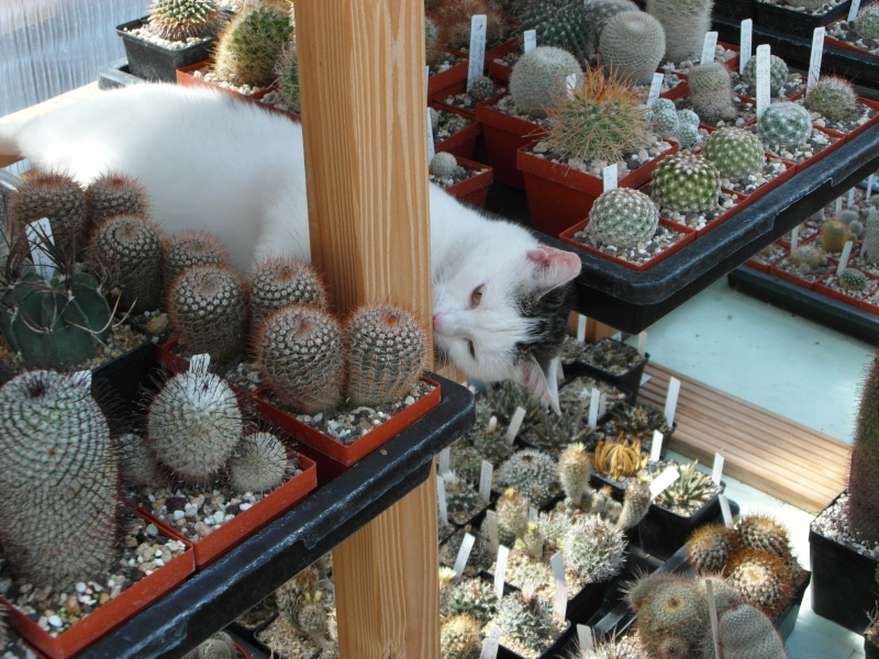 Cacti and Sukkulent in Köln, every day new flowers in the greenhouse Part 76 Bild1341