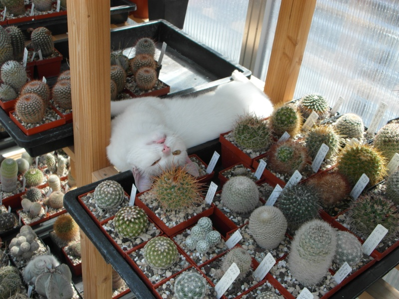 Cacti and Sukkulent in Köln, every day new flowers in the greenhouse Part 76 Bild1342