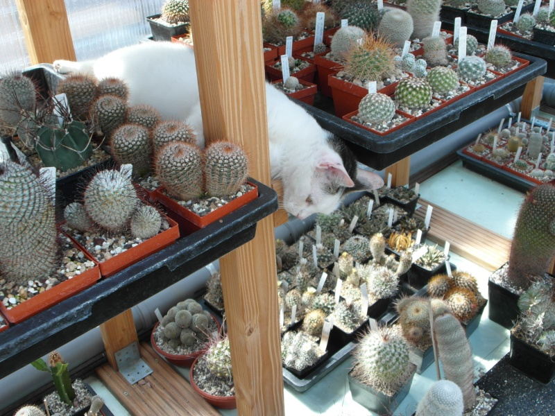 Cacti and Sukkulent in Köln, every day new flowers in the greenhouse Part 76 Bild1343