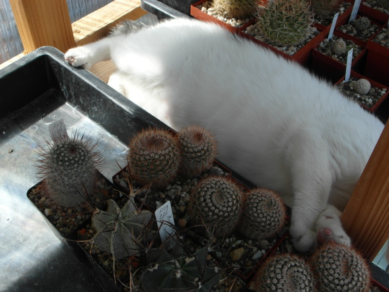 Cacti and Sukkulent in Köln, every day new flowers in the greenhouse Part 76 Bild1344