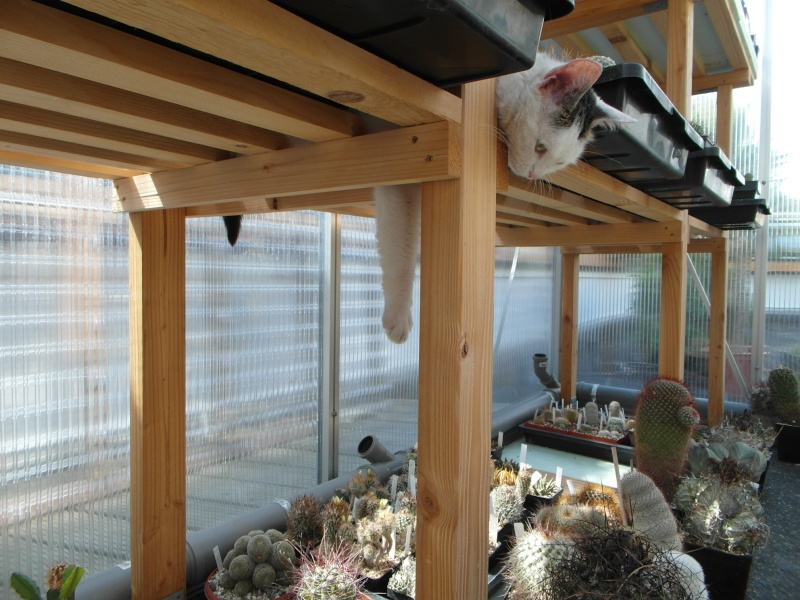 Cacti and Sukkulent in Köln, every day new flowers in the greenhouse Part 76 Bild1346